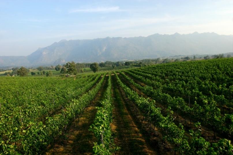 農業観光が楽しめるパークチョン
